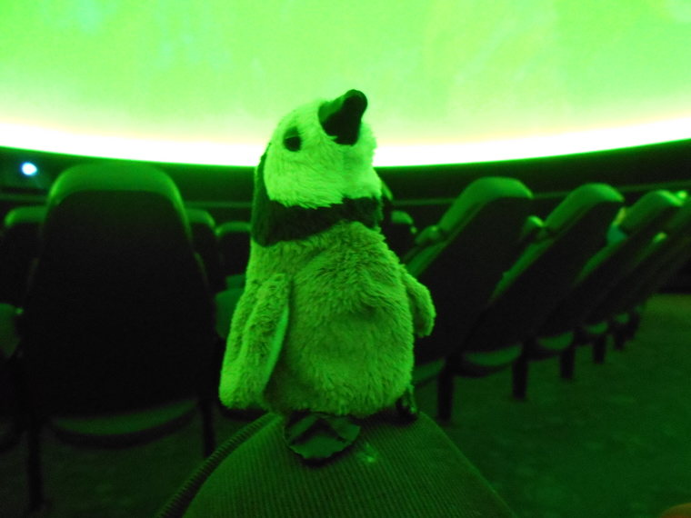 penguin in planetarium