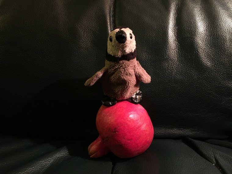 Penguin sitting on a pomegranate not for laundry